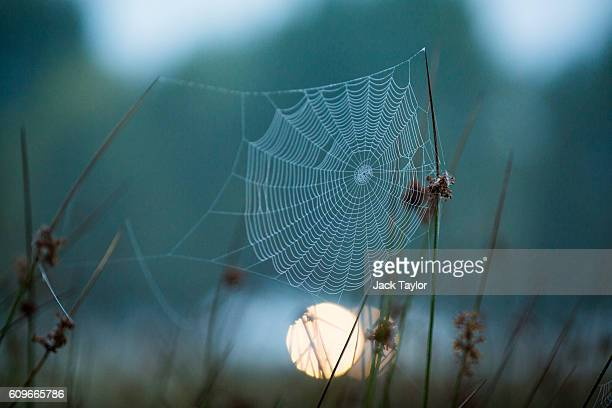 A spider's web hangs from blades of grass at dawn in Richmond Park on September 22 2016 in London England Today marks the first day of autumn also...