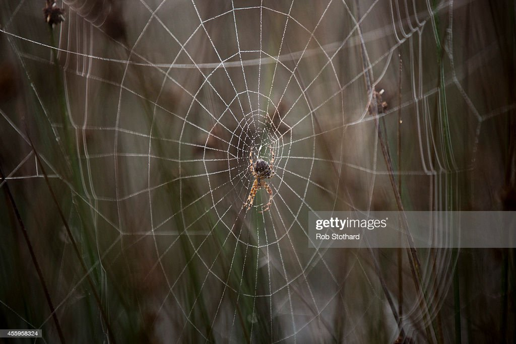 A spider's web is seen in the morning light in Richmond Park on September 23 2014 in London England Tuesday marks the autumn equinox where day and...