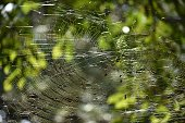 spider, nest, insect, nature