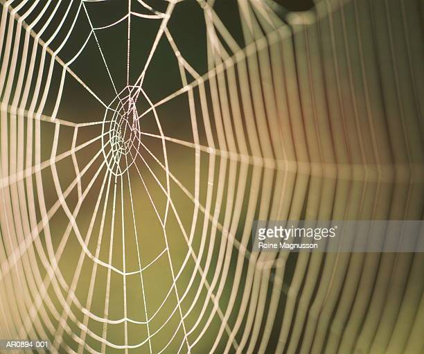 Spider's web with dew drops, close-up