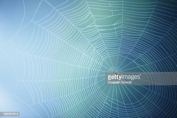 Spider's web with spider