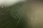 Spiderweb or cobweb outdoors on a cold rainy day. Macro photo or close up picture of a cobweb made by spider on a dark green background.