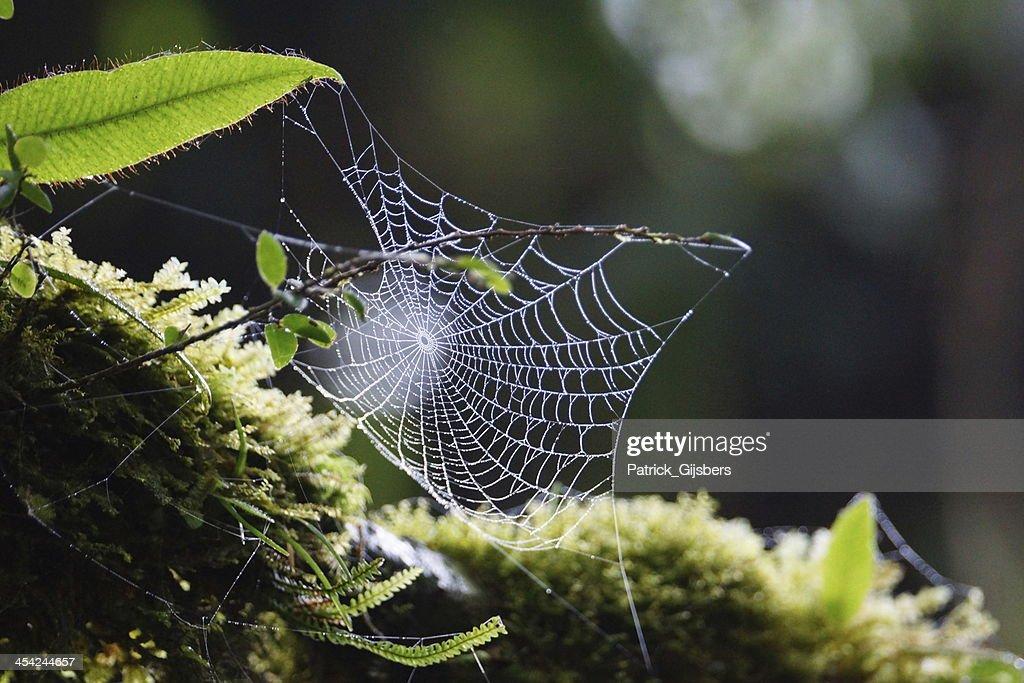Spiderweb : Stock Photo