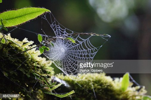 Spiderweb : Stock Photo