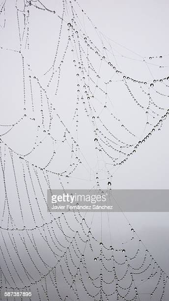 A spiderweb with dew drops in the fog