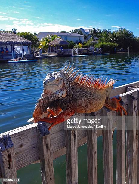 Spiky Iguana On Wooden Railing By Lake Against Sky