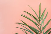 Spiky Palm Tree Leaf on Pink Peachy Wall Background. Room Plant Interior Decoration. Hipster Funky Style Pastel Colors. Seaside Vacation Fun Wanderlust Fashion Concept