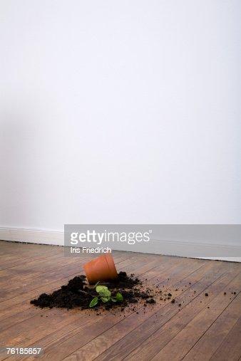A spilt potted plant