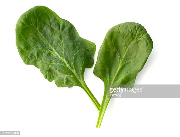 Spinach, Healthy Leaf Vegetable Isolated Cut Out on White Background