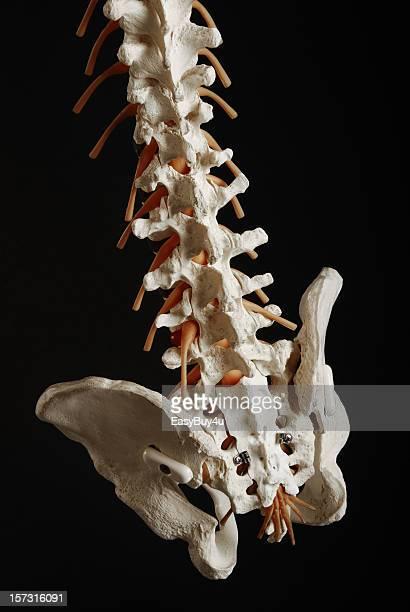 Spine details