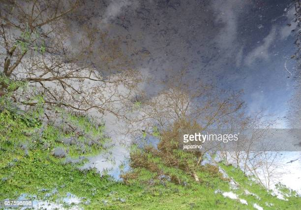 Sping scene reflected in puddle