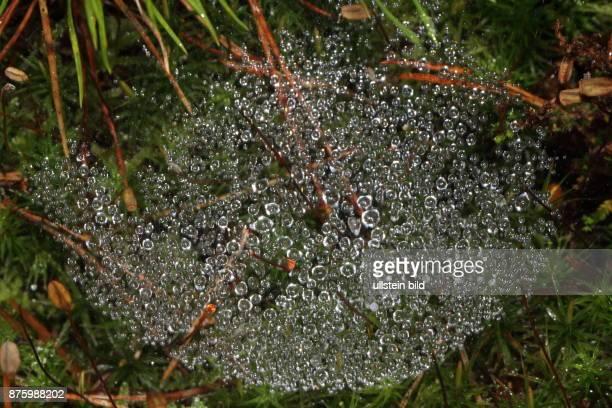Spinnennetz Faeden mit glitzernden Raureiftropfen