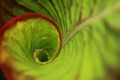 Leaf Green spiral in the rainforest
