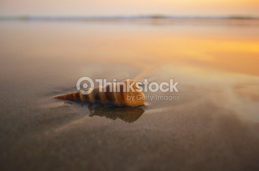 spiral shell on a beach : Stock Photo