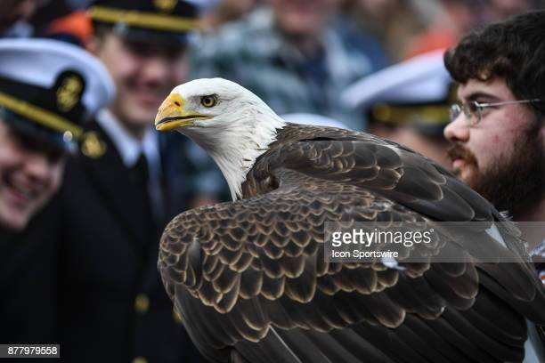 Spirit a bald eagle who flew prior to a football game between the Auburn Tigers and the ULM Warhawks on Saturday November 18 2017 at JordanHare...
