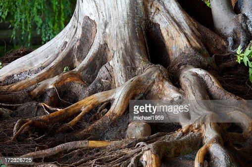 Spiry roots burrowing inside soil