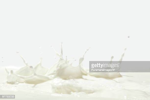 Splashing Milk on a White Background
