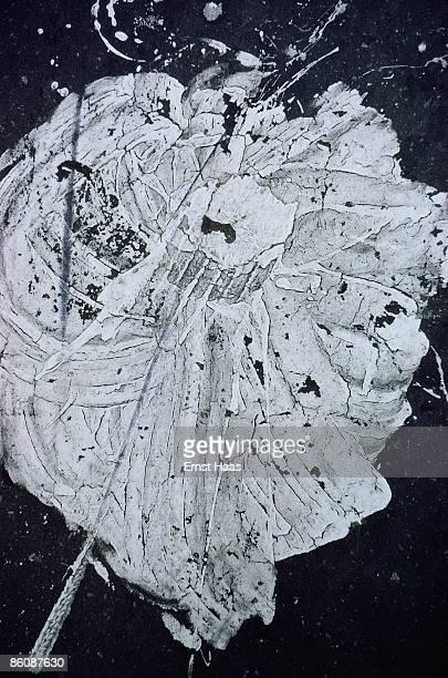 A splatter of white paint September 1971