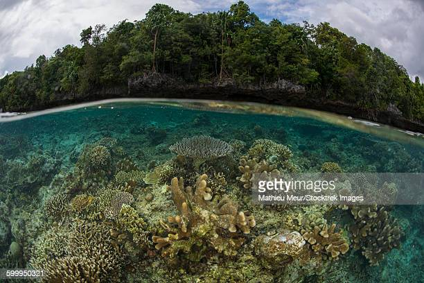 Split image of shallow hard coral reef in front of island with virgin forest.