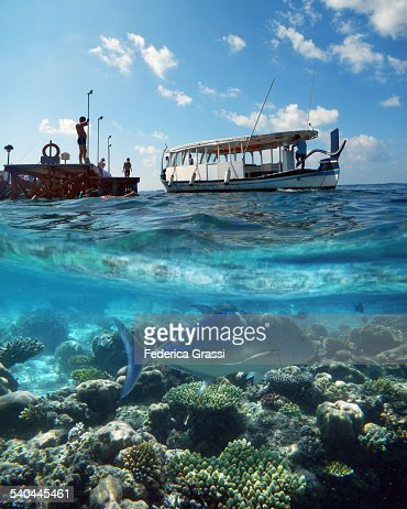 Split Level Photo of Coral Reef and Dhony