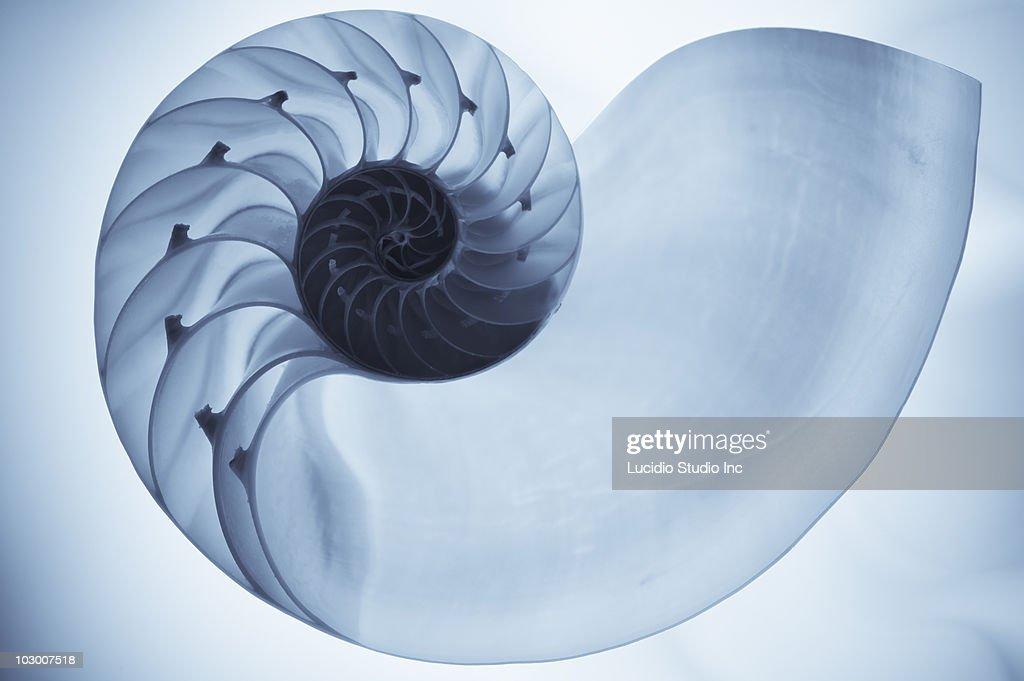 Split nautilus seashell