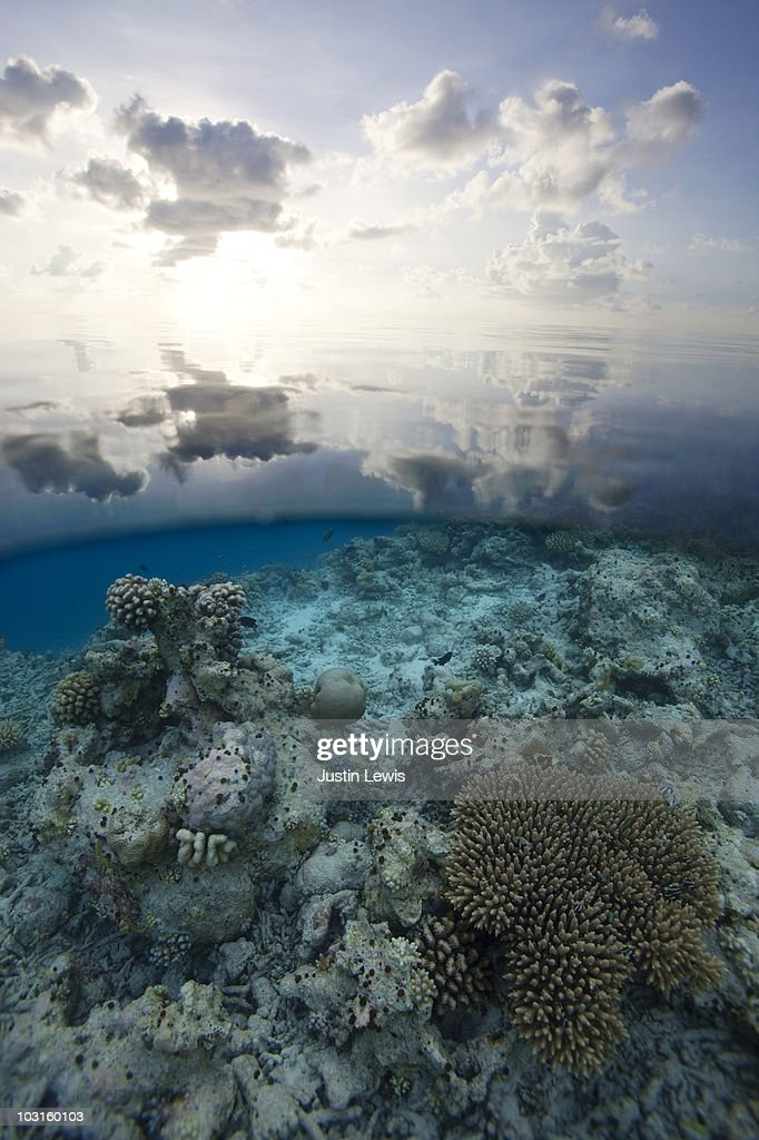 Split shot, coral reef in the Maldives : Stock Photo