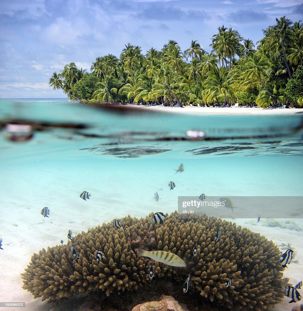 Split shot of tropical paradise : Stock Photo