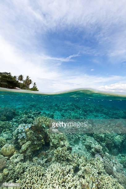 Splitshot, buceo en el parque nacional de Bunaken Siladen Island, Indonesia