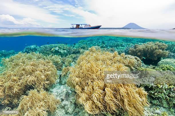 Splitshot, Diving the National Park, Siladen, Bunaken, Manado Tua, Indonesia
