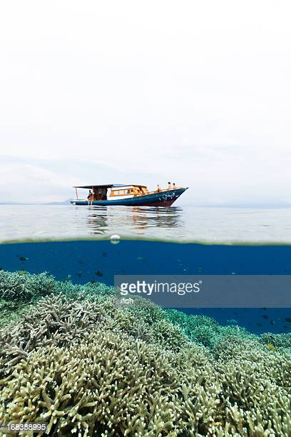 Splitshot 、ミドリイシサンゴ礁やダイビング、ボート、北スラウェシ州インドネシア
