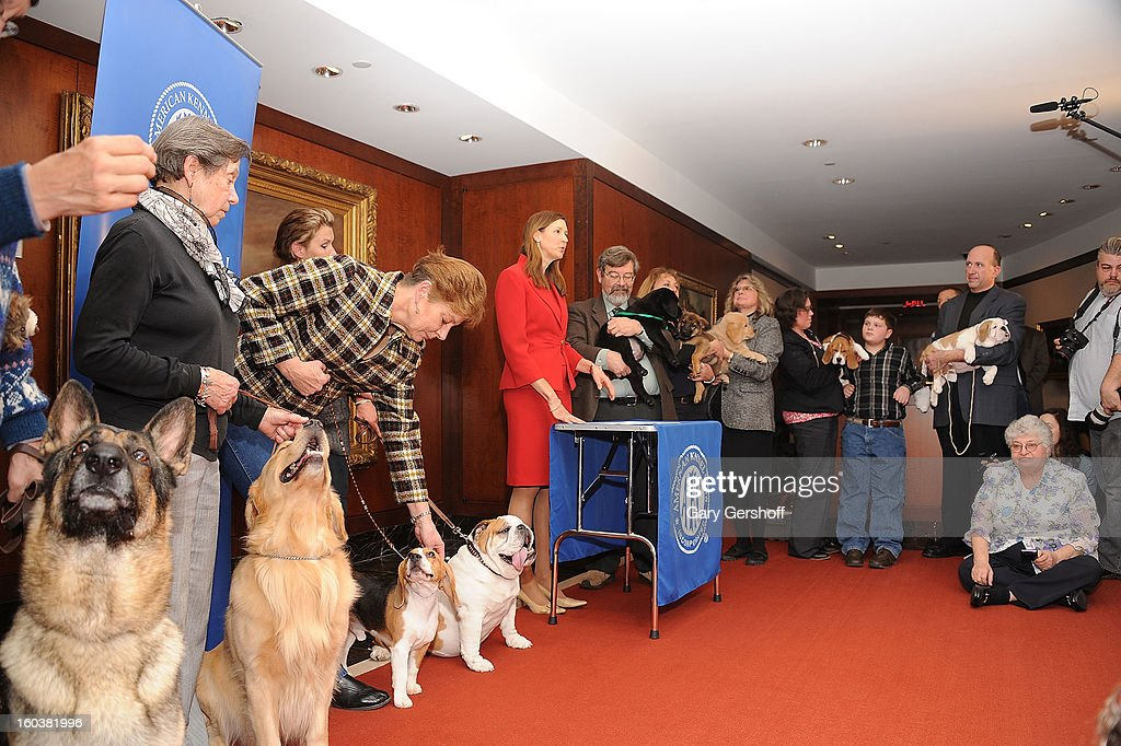 AKC spokesperson, Lisa Peterson (C) speaks to the media as the American Kennel Club Announces Most Popular Dogs in the U.S. on January 30, 2013 in New York City.