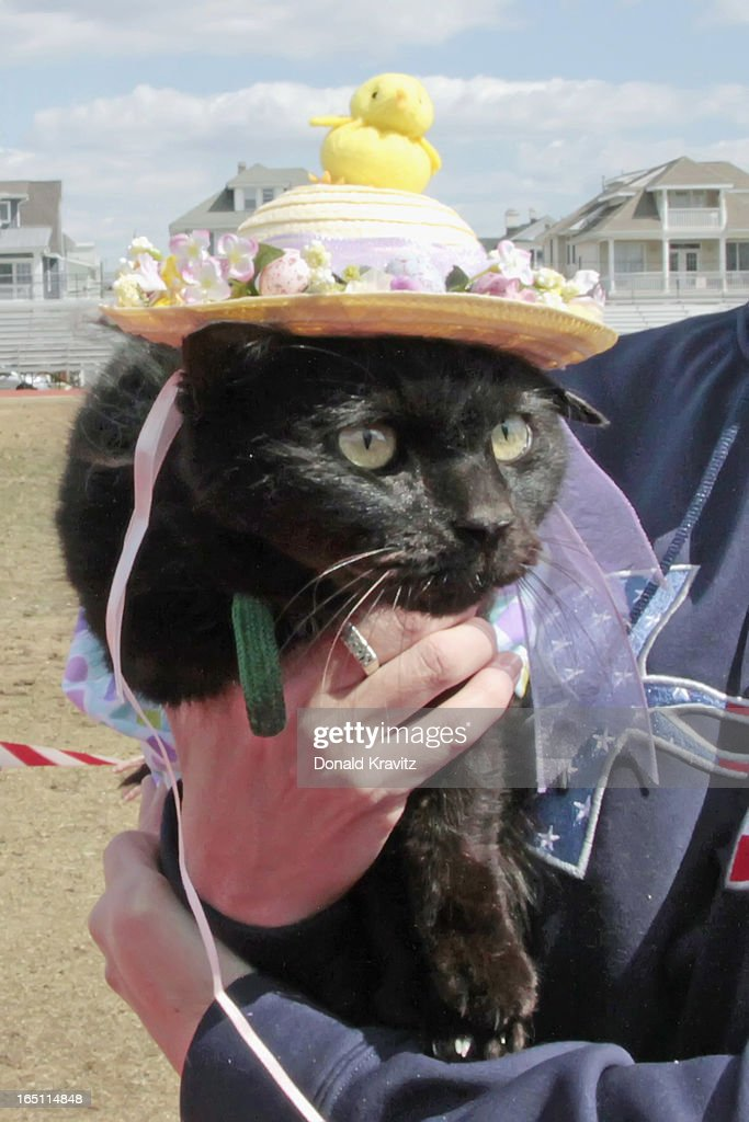 Spookie, a black cat, attends the Woofin Paws pet fashion show at Carey Field on March 30, 2013 in Ocean City, New Jersey.