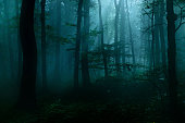 Dark forest at night in the light of a full moon, some fog and lots of spiderwebs add the spooky atmosphere