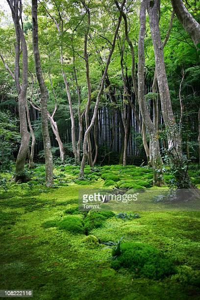 Spuk Wald
