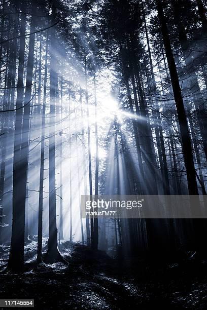 Spettrale foresta