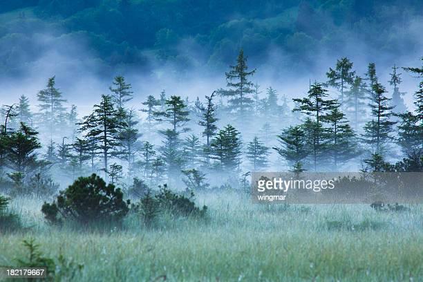 Spuk Wald mit Nebel, Geringe Tiefenschärfe