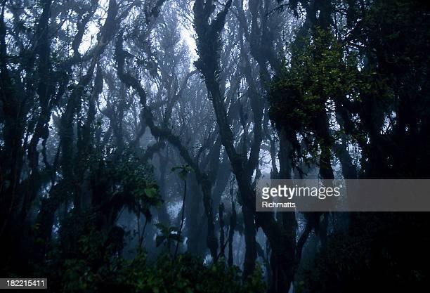 Fantasmagorie arbres de la Jungle africaine