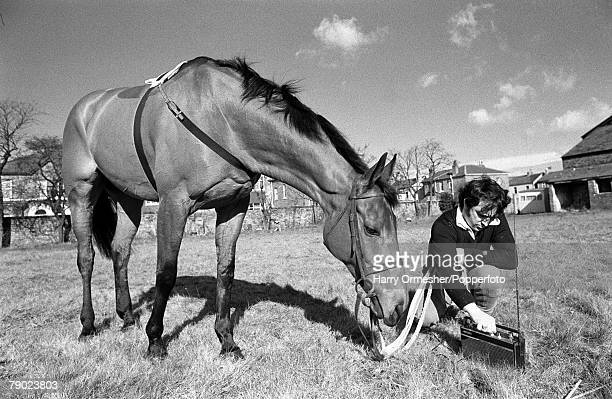 Sport Horse Racing Liverpool England February 1975 Legendary racehorse Red Rum is pictured in a field with a radio