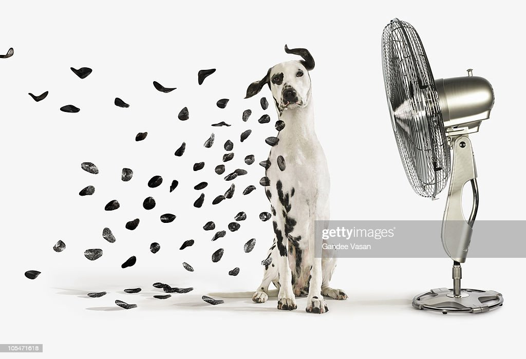 Spots flying off Dalmation dog : Stock Photo