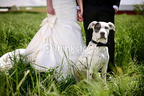 Spotted Dog Attends A Wedding As Best Man Stock Photo Thinkstock