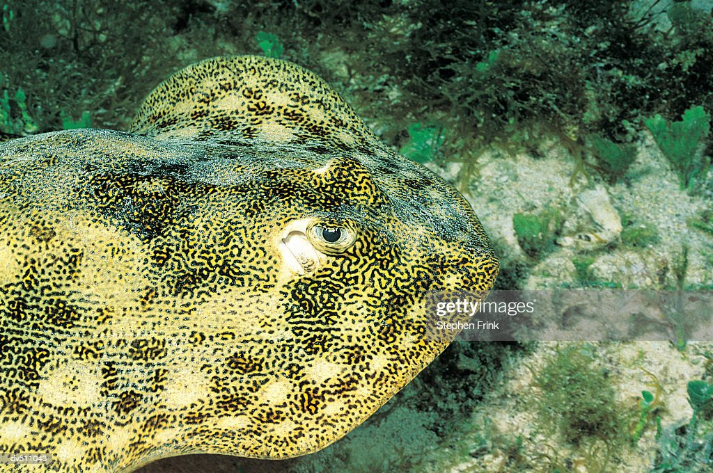 spotted fish : Stock Photo