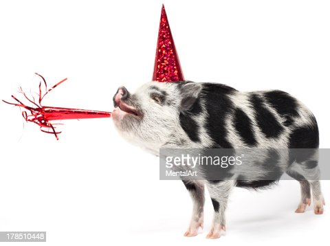 Spotted pig wearing a party hat with noise maker : Stock Photo