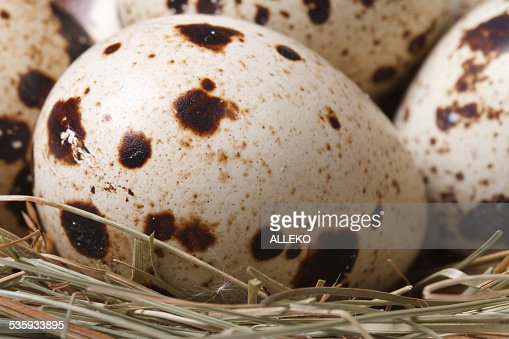 spotted quail eggs in nest close up. macro. vertical : Stock Photo