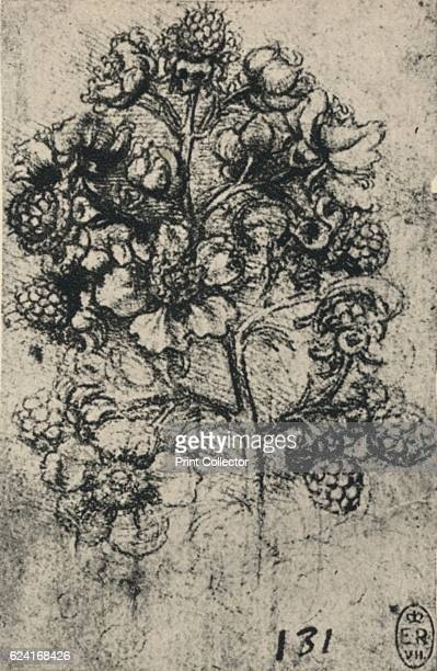 A Spray of Brambles' c1480 From The Drawings of Leonardo da Vinci [Reynal Hitchcock New York 1945] Artist Leonardo da Vinci