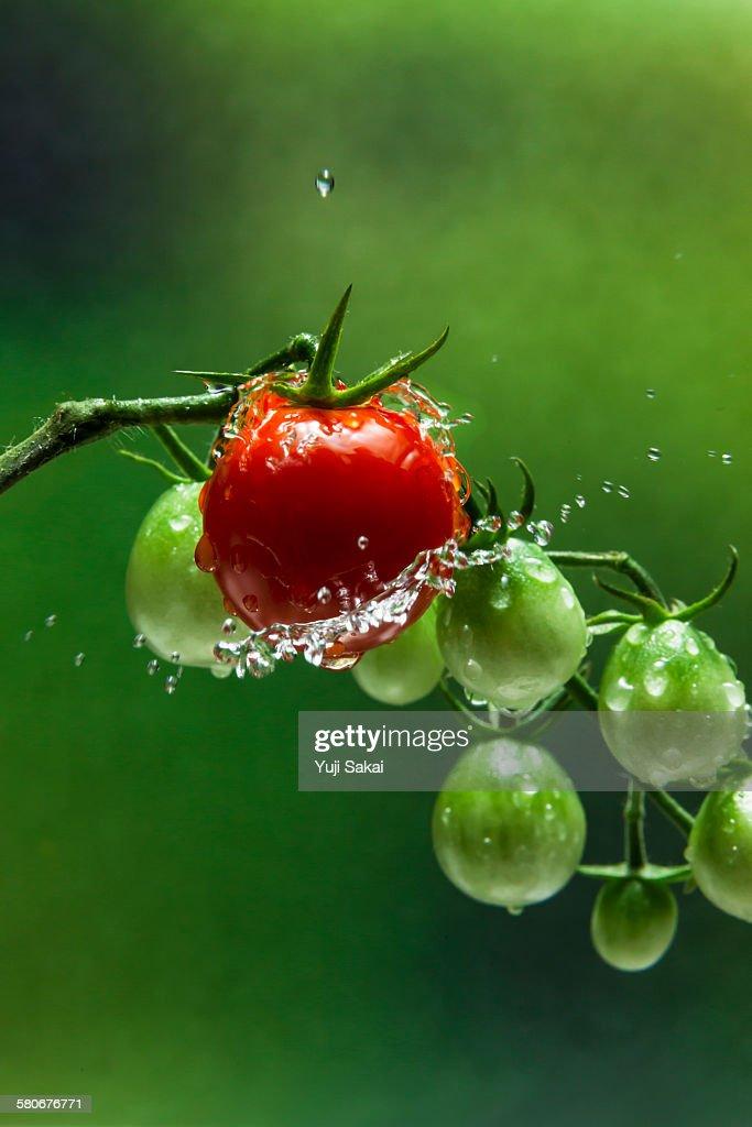 spray of water on mini-tomato