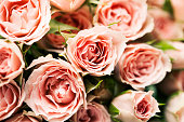 Close up of pink spray roses, background