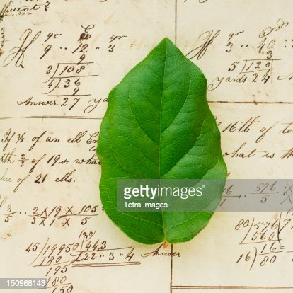 Spreadsheet with green leaf