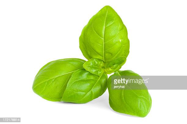 Sprig of Basil