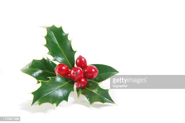 Sprig of green holly and ripe red berries