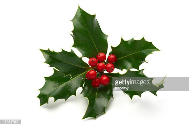Sprig of holly leaves and berries isolated on white